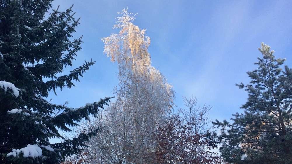 winterspaziergang2016_nov-1000pix_1