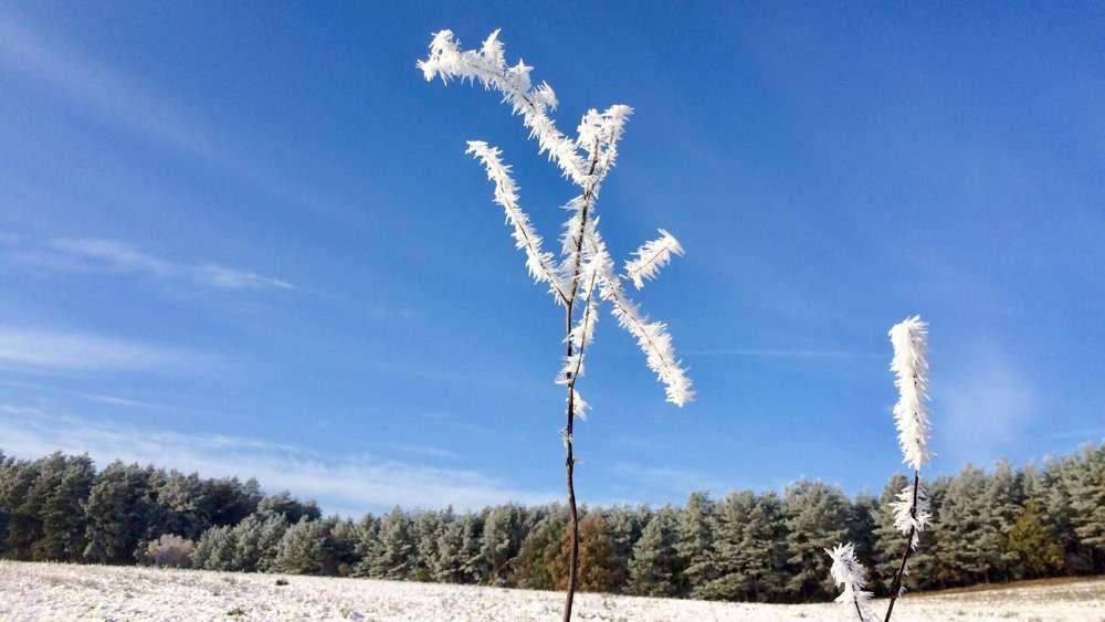 winterspaziergang2016_nov-1000pix_12