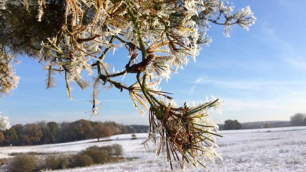 winterspaziergang2016_nov-1000pix_8